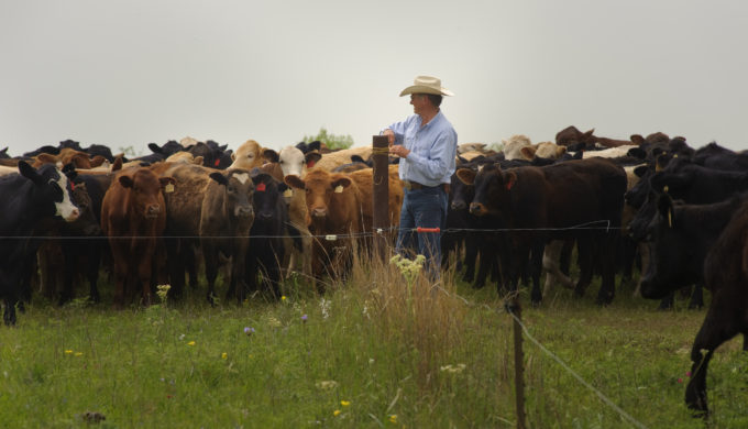 Modern-Day Rustlers Wrangle Millions of Dollars From Texas Ranchers