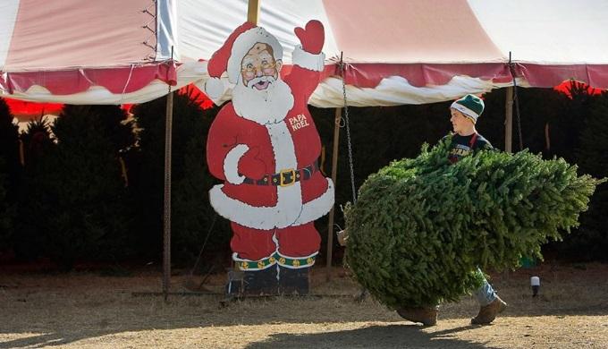 Christmas Tree Farms Papa Noel Christmas Tree Farm