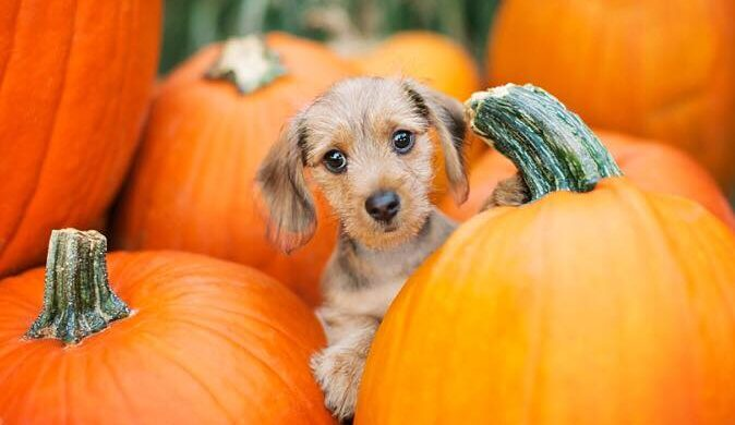 Circle N Maze Offers Doggie Days on a Weekend in the Fall