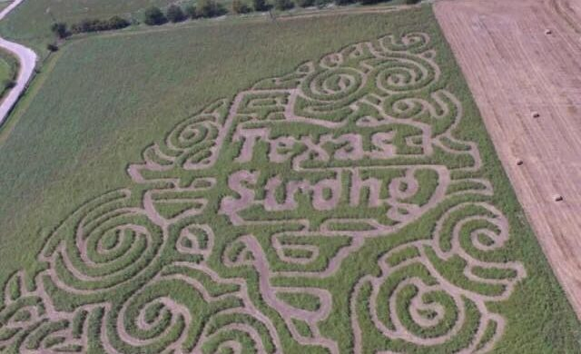 Circle N Maze is Texas Strong with its Corn Maze this September