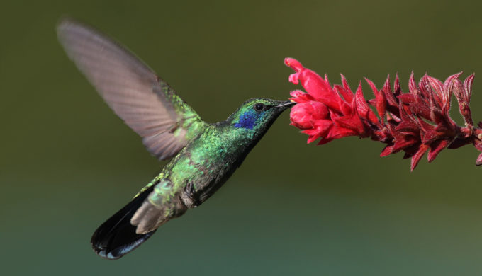 Welcoming & Tracking Hummingbirds in the Texas Hill Country