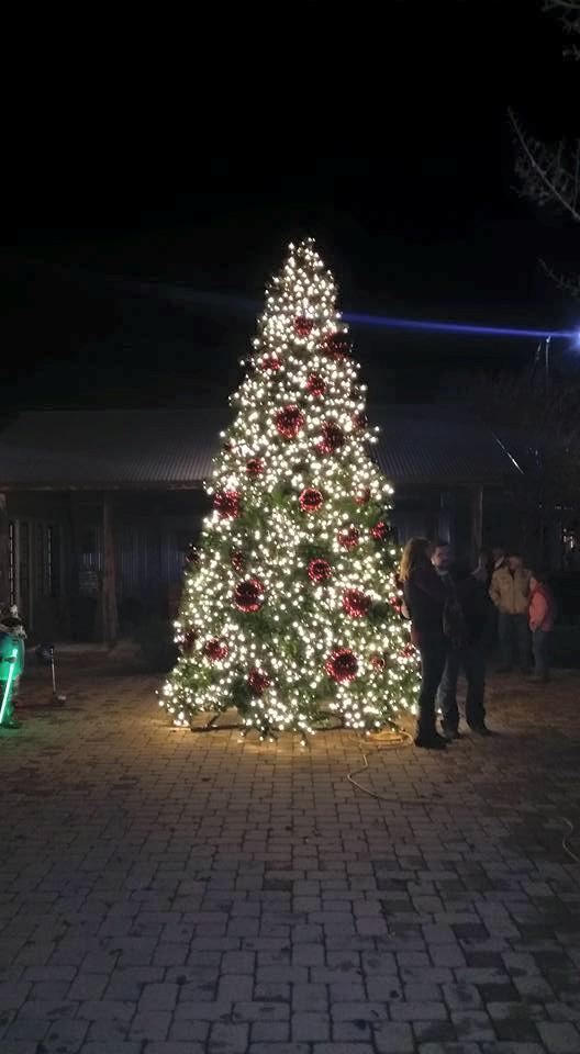 Christmas In Comfort Texas 2020 comfort texas christmas tree   Texas Hill Country