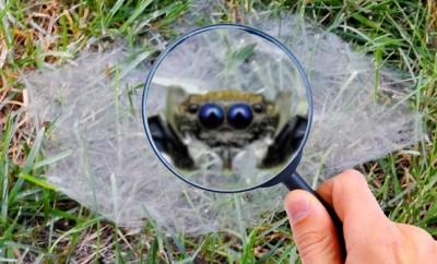 Common Texas Spiders
