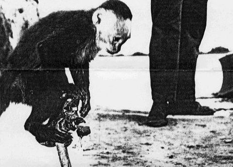 Black and white photo of Coxville's first monkey, Junior, pouring water for a puppy.
