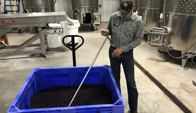 Stirring the grapes in fermentation