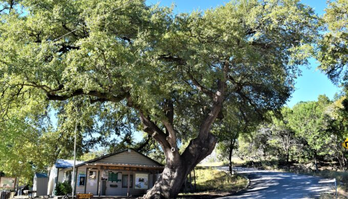 Camping at the River's Edge: Colorado Bend State Park