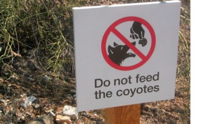 Do not feed Texas Hill Country coyotes