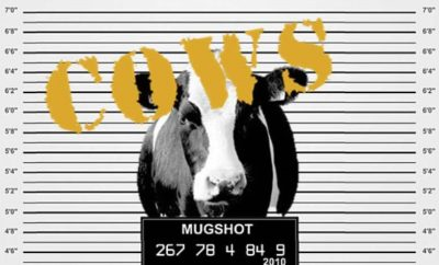 America's Most Wanted…Cow: Weatherford Police Wrangle Something Larger on Groundhog Day