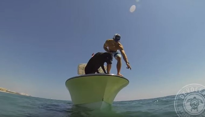 Dog hunting lobster from boat!