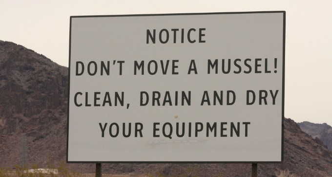Don't Move A Mussel!