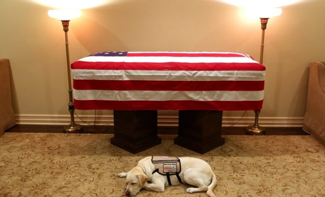Service Dog to Former President Will Assist Wounded Soldiers