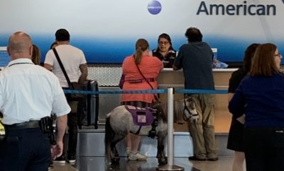 Miniature Service Horse Travels With Companion on Flight to Omaha