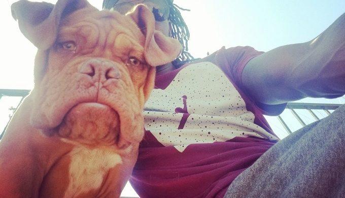 Arlington PD Search for Veteran's Stolen Service Dog