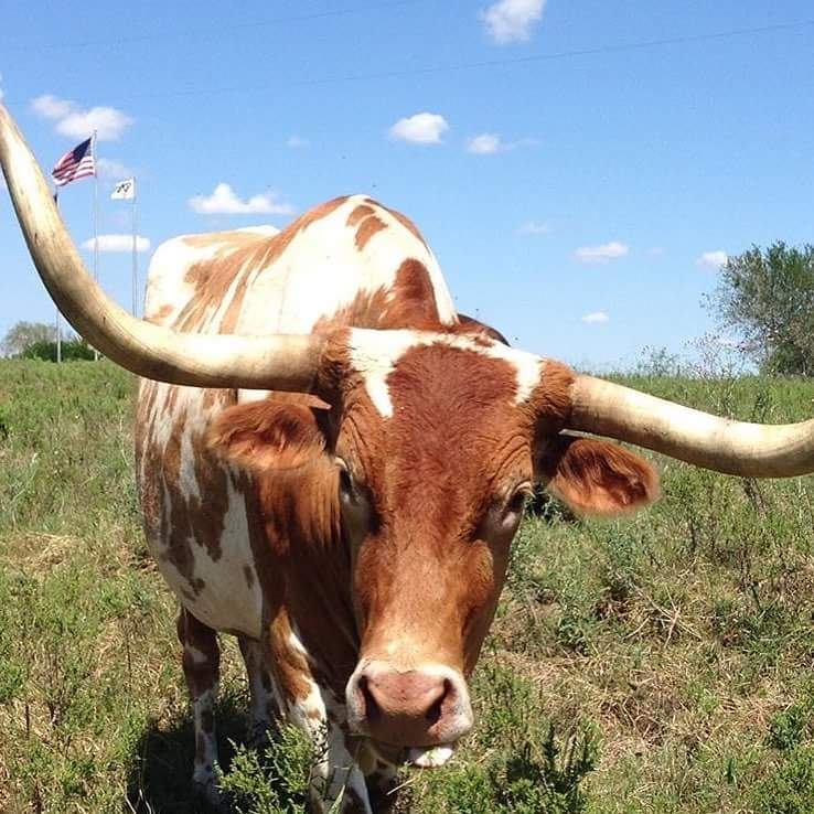 King Ranch Texas >> Texans Love Texas King Ranch Texas Hill Country
