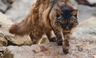 Types Of Wild Suburban Black Cats