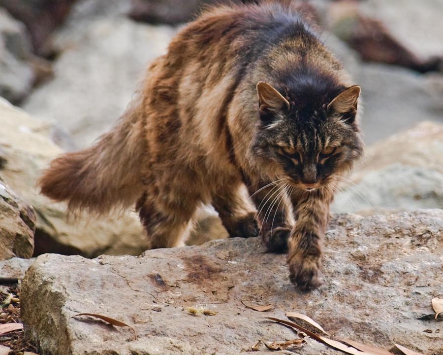Are Black Cats Rare