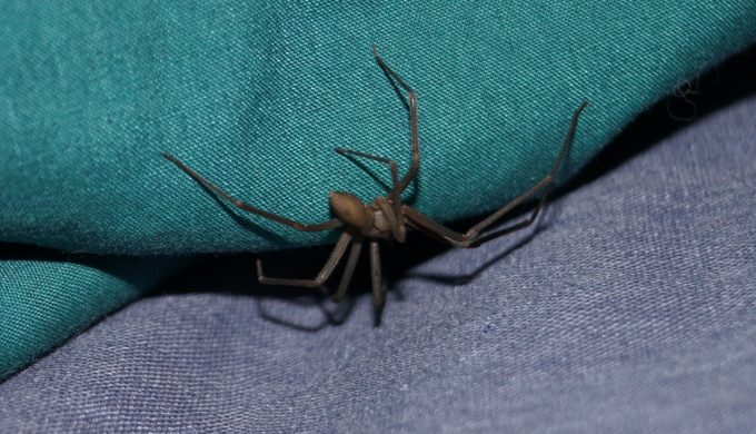 5 Texas Bugs That Will Give You the Heebie-Jeebies