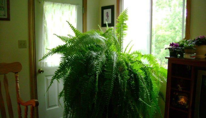 Plants That Purify