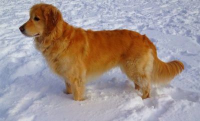 Loving Dog Keeps Owner Alive in Freezing Temperatures
