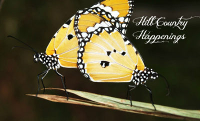 Hill Country Happenings Butterflies