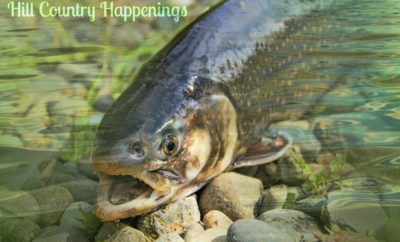Hill Country Happenings Trout