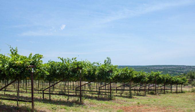 Haute Vineyard.2 2019