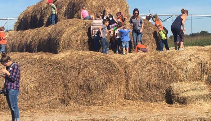 Hay Stacks to Climb on at Circle N Maze