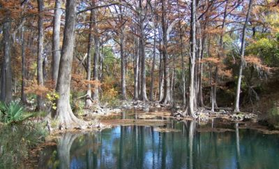 Honey Creek in Guadalupe River State Park