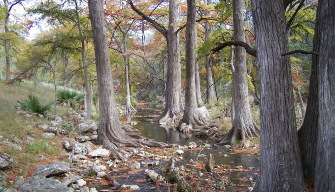 Honey Creek is one of the many sights you'll see in Guadalupe River State Park