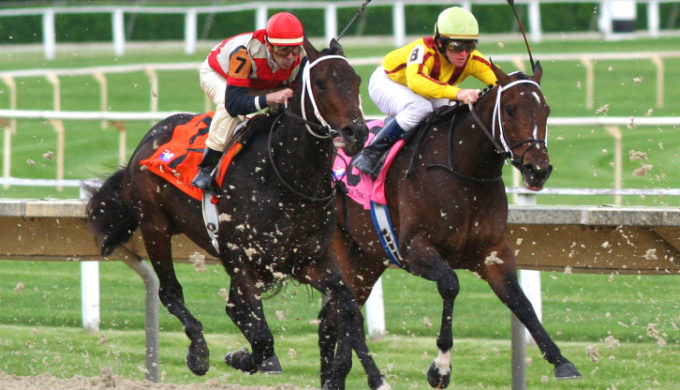 Horserace_520133030
