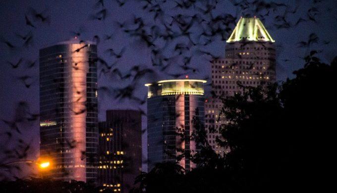 Houston bats