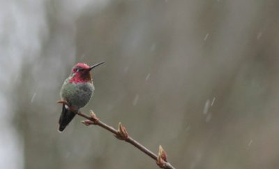 Hummingbird in storm