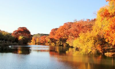 A Quest for Beautiful Fall Color in the Texas Hill Country