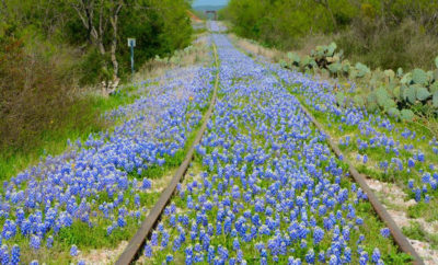 5 Great Places to See Beautiful Bluebonnets in Texas