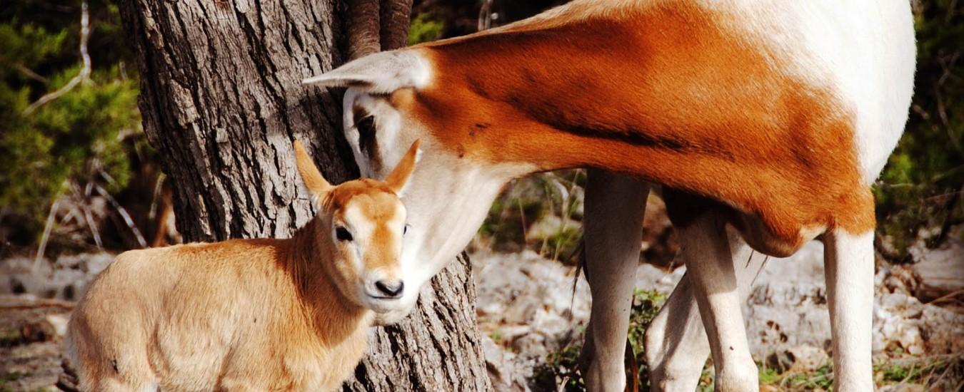 Kristin Grahmann - Natural Bridge WildlifeRanch
