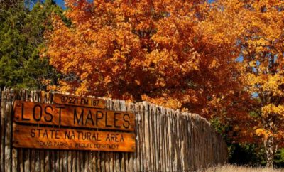 Autumnal Paradise: Lost Maples State Natural Area