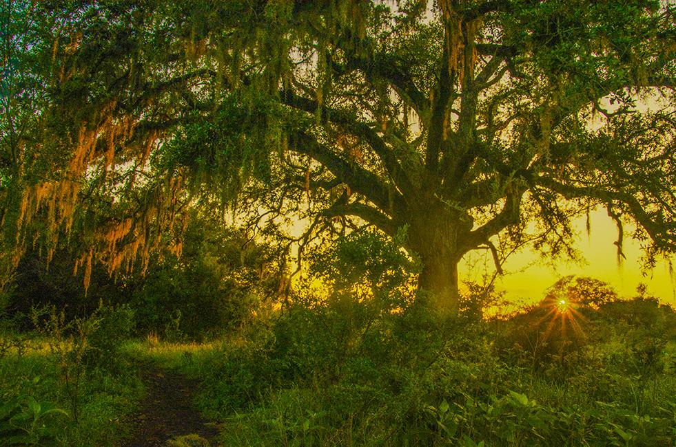 Purgatory Creek Sunsets