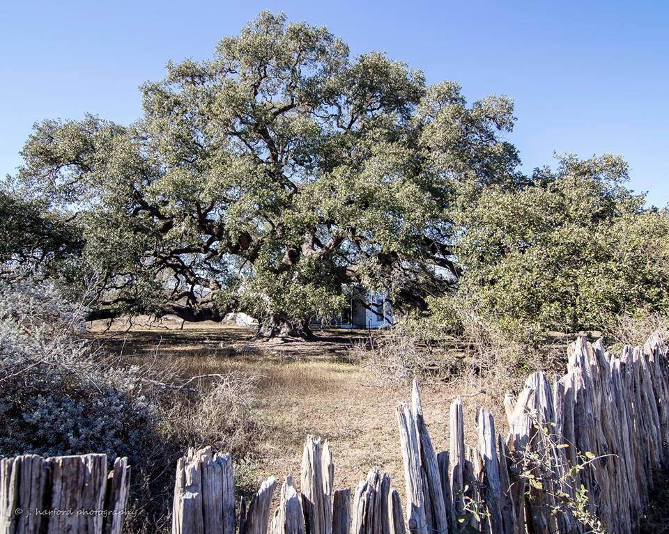 life-oak-landmark-2