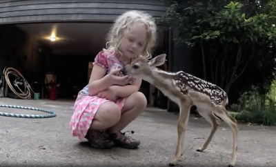 Little girl and fawn video