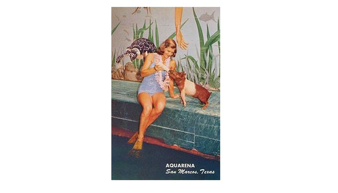 Margaret Russell training Ralph the Swimming Pig at Aquarena Springs