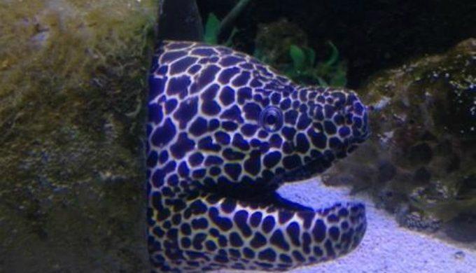 Marley Rockport Aquarium
