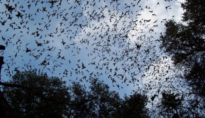 Millions of bats live at Old Tunnel State Park