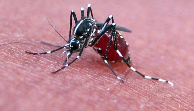 American Technology Companies Join War Against Zika Virus