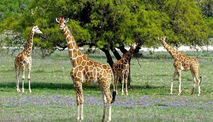 Ox Ranch wildlife