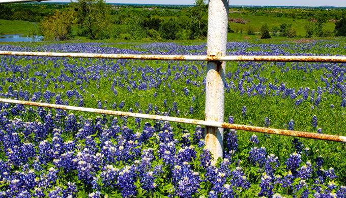 Texas Spring Road Trip: Chevy Tackles Ennis Bluebonnet Trails & Festival