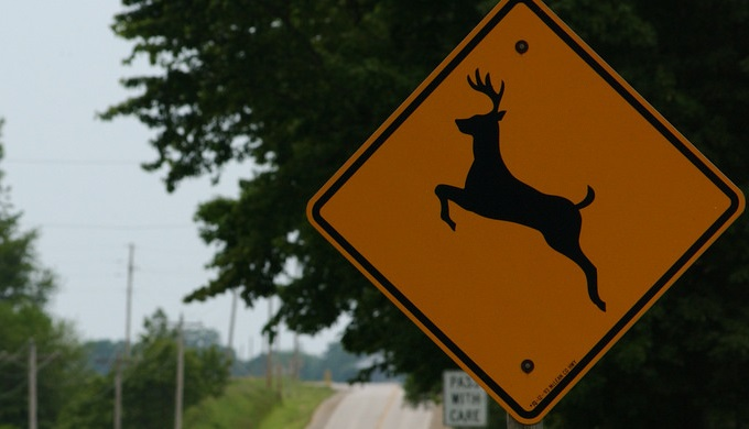 Pay attention to signs to avoid deer collisions