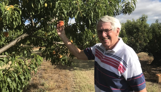 Peachy Perfect! Hill Country Peaches are Ripe for Picking