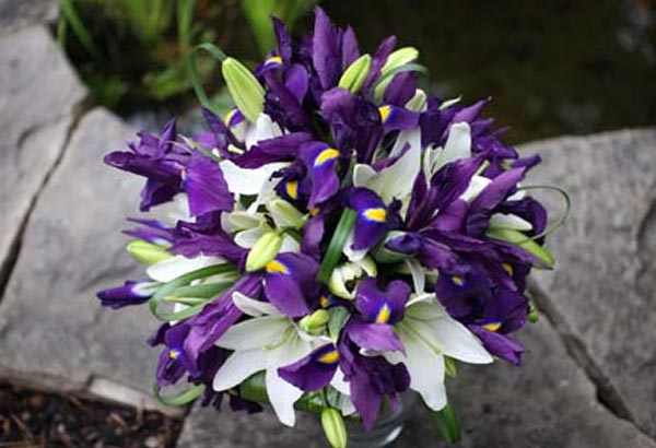 """7. This flowers name translates to """"rainbow"""" in Greek. There is an estimated 300 types of species in a variety of colors. It is also the state flower of Tennessee."""
