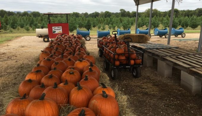 Pipe Creek Pumpkin Patch