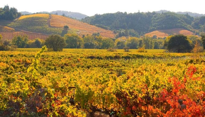 Puzzled by Thanksgiving Pairings? A Hill Country Wine Guide